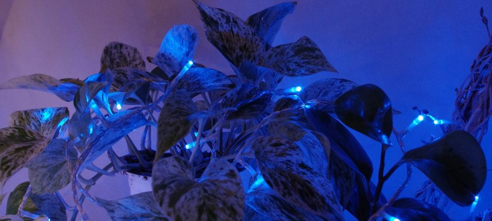 URBAN JUNGLE BLOGGERS | PLANTS AND LIGHTS