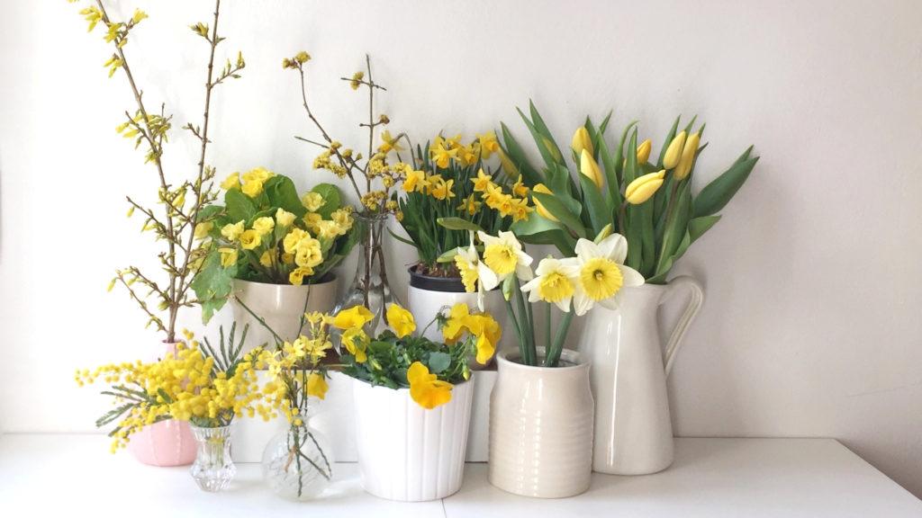 iori gialli di marzo